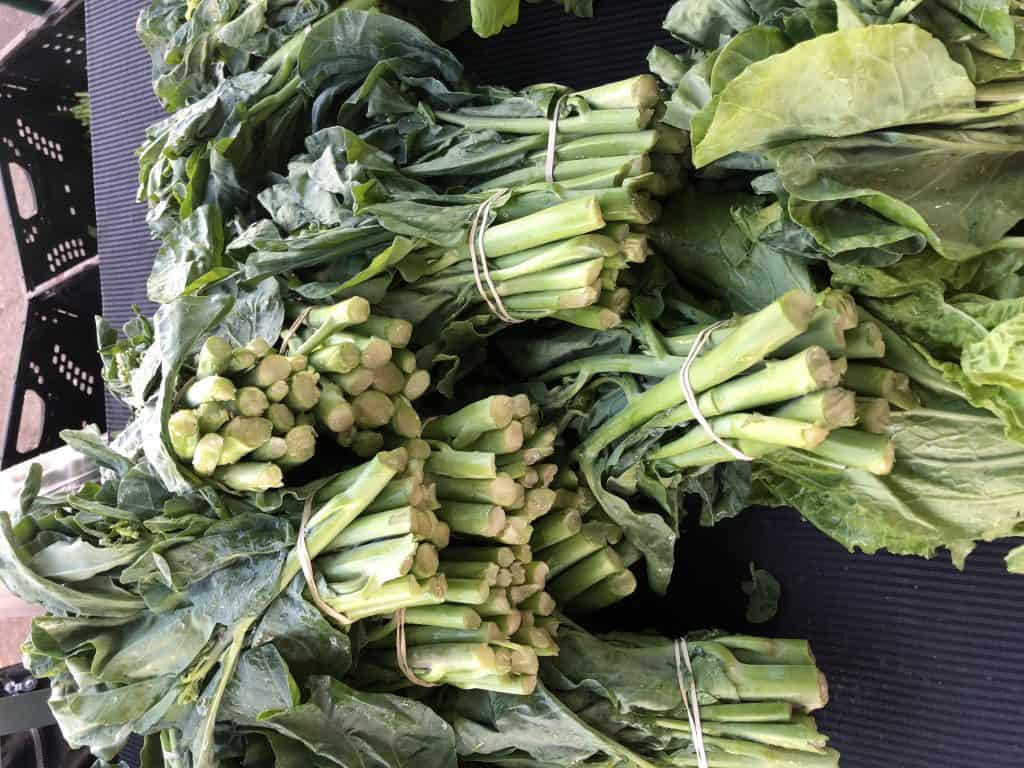 chinese broccoli gailan
