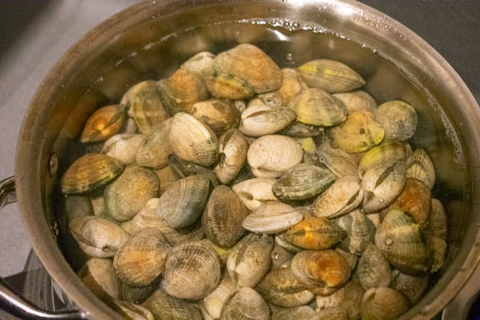 manila clams in pot with water