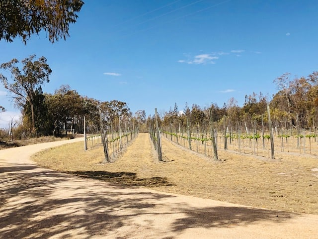 Grapevines in the Granite Belt wine region