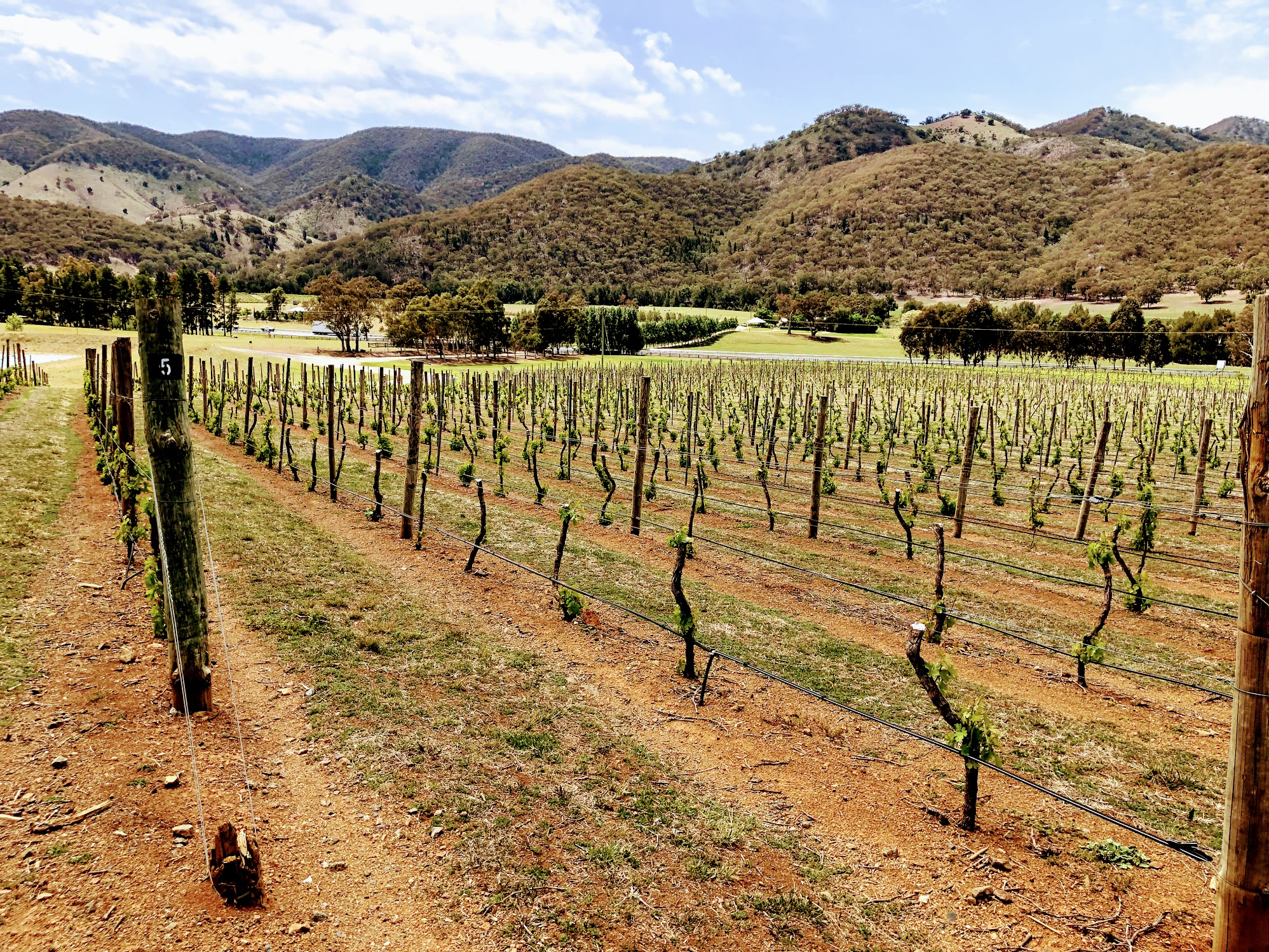 Logan wine vines in Australia