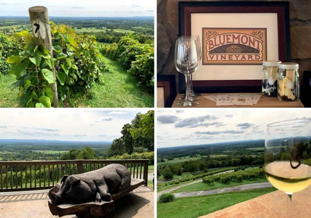 4 pictures at BlueMont Vineyard in Virginia